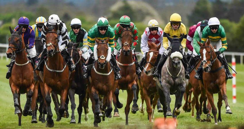 January's Best New Tipsters