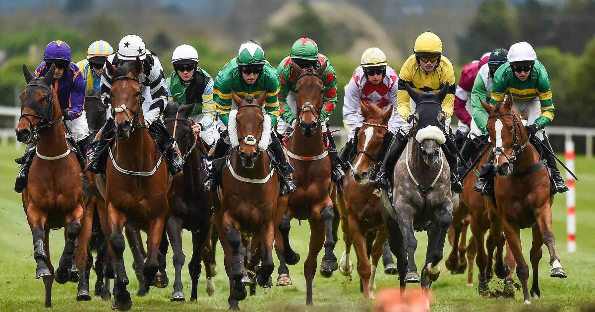 Exp on a horse bet steaua bucuresti v chelsea betting tips