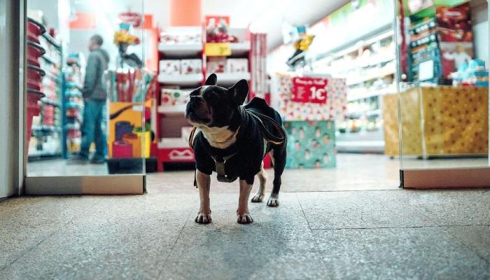 Pet business trends