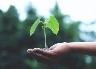 eco-friendly business